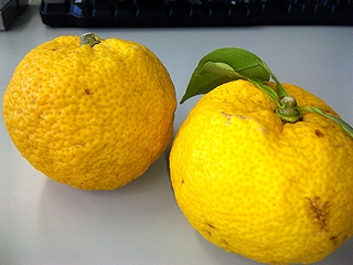 福島産柚子