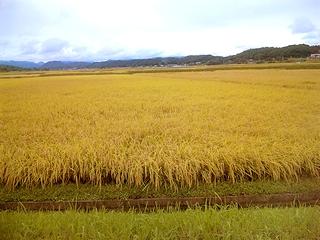 天栄村の米