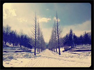 雪のいちょう並木