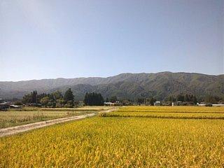 山と田んぼ