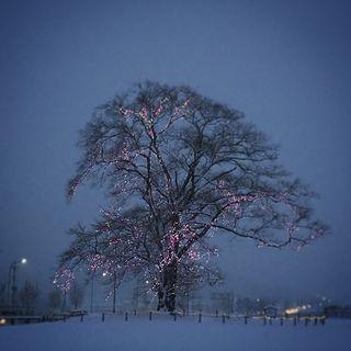 安達の電飾桜